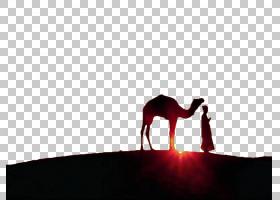 开斋节穆巴拉克的剪影,天空,剪影,骆驼般的哺乳动物,伊斯兰教中的