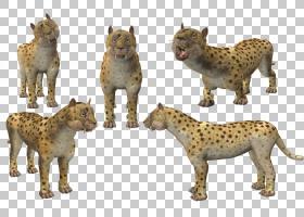 猫卡通,动物形象,野生动物,游戏,迪诺费利斯・巴洛伊(Dinofelis B