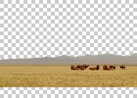 卡通自然背景,稀树草原,生态区,羊群,天空,骆驼般的哺乳动物,野生