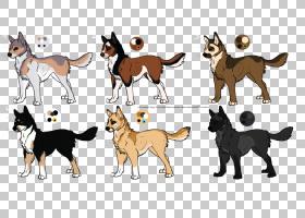 边境牧羊犬,动物形象,骆驼般的哺乳动物,尾巴,野生动物,狗,马,蠕