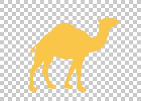 橙色背景,阿拉伯骆驼,黄色,骆驼般的哺乳动物,牲畜,骆驼,动画片,