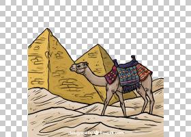 埃及金字塔,阿拉伯骆驼,骆驼般的哺乳动物,牲畜,埃及,骆驼,符号,