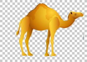 法老,阿拉伯骆驼,鼻部,黄色,骆驼般的哺乳动物,骆驼,牲畜,纳费尔