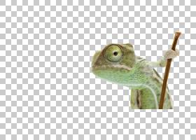 变色龙背景,动物形象,蜥蜴,青蛙,实验室,计划,业务计划,业务,戴面