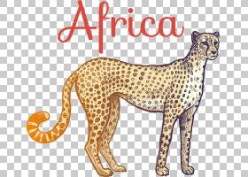 背景图案,动物形象,图案,设计,尾巴,彪马,野生动物,打印,绘图,动