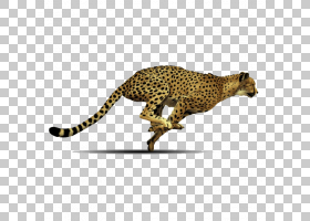 背景图案,图案,爬行动物,捷豹,野生动物,猕猴桃属,豹子,猎豹,