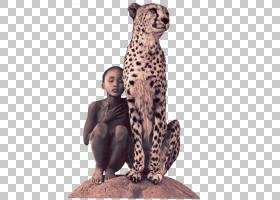 大象背景,猎豹,豹子,毛发,野生动物,捷豹,艺术展,大象,胶片,展览,