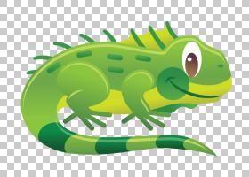 变色龙背景,树蛙,绿色,青蛙,变色龙,普通鬣蜥,动画,绘图,动画片,