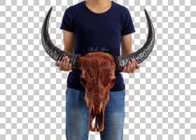 骷髅符号,公牛,鼻部,几何体,狩猎,美国野牛,古代史,宇宙,英国长角
