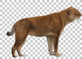 狗和猫,动物形象,毛发,彪马,野生动物,黑豹,狗,老虎,印度支那虎,