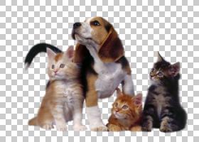 狗和猫,胡须,伴犬,鼻部,狗,猫狗,印花猫,狗舍,小狗,宠物,马,吉娃
