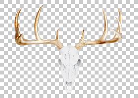 红头骨,驯鹿,金属,墙,喇叭,骷髅架,动物,狩猎,标本制作,驼鹿,马鹿
