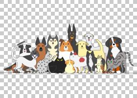 猫狗卡通,不会飞的鸟,动画片,猫狗,狗的智能,小狗,猫粮,宠物,猫,