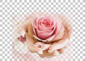 背景家庭日,花卉产业,花束,插花,花瓣,花卉设计,切花,小叶月季,手