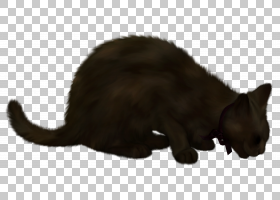 小猫卡通,尾巴,爪子,毛发,鼻部,猫,动画,黑色,绘图,动画片,胡须,