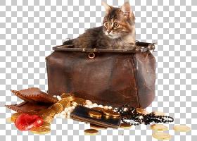 小猫卡通,巧克力,食物,女人,动物,胡须,小猫,猫,