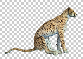 背景图案,图案,豹子,动物,野生动物,非洲豹,猎豹,