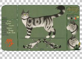 猫卡通,尾巴,动画片,爪子,猫,小猫,胡须,