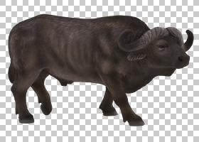 非洲家庭,动物形象,喇叭,鼻部,公牛,公牛,野牛,儿童,象科(Elephan