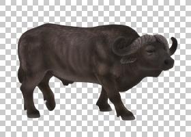 非洲家庭,动物形象,鼻部,公牛,喇叭,公牛,野牛,游戏,施莱希,儿童,