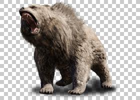 熊背景,毛发,鼻部,PlayStation 4,洞穴,咆哮,短面熊,Xbox One,灰
