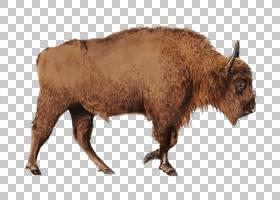 山羊卡通,公牛,动物,野生动物,鼻部,公牛,喇叭,牛只,野牛,