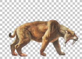 狮子卡通,动物形象,狮子,彪马,野生动物,冰河时代,佩剑,咆哮,化石