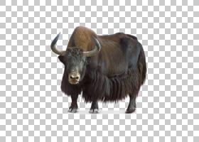 山羊卡通,麝香,野牛,鼻部,公牛,公牛,野生动物,喇叭,牦牛,公牛,牛