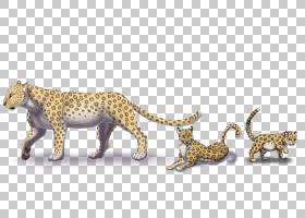 猫卡通,尾巴,动物形象,野生动物,豹子,艺术家,雪豹,非洲豹,捷豹,