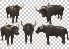 族的绘制,牲畜,牛羊科,公牛,鼻部,公牛,工作动物,动物形象,喇叭,