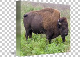 族的绘制,鼻部,草,野生动物,绘图,画布,打印,帆布印花,放牧,水牛