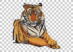 猫卡通,鼻部,咆哮,胡须,野生动物,白虎,剑齿虎,剑齿猫,黑虎,老虎,