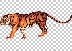 猫卡通,尾巴,鼻部,野生动物,动物形象,老虎,动物,东北虎,动画片,