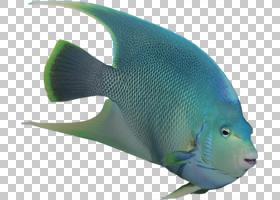 珊瑚礁背景,鳍,可持续性,自然环境,环境教育,生物学,鱼,污染,保护