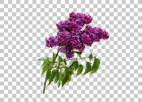 花卉手绘插画免扣元素素材图片