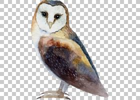 水彩猫头鹰