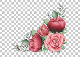 植物花卉玫瑰手绘插画免扣元素