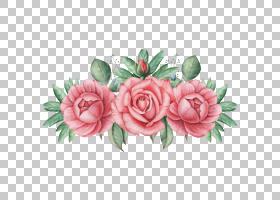 玫瑰花手绘插画免扣元素