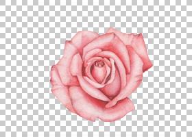 手绘玫瑰插画免扣元素