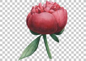 玫瑰花手绘插画免扣元素素材