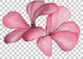 粉色花卉免扣元素素材图片