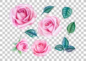 花卉免扣元素素材图片