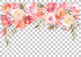 花卉边框图片