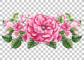 粉色花卉免扣元素素材
