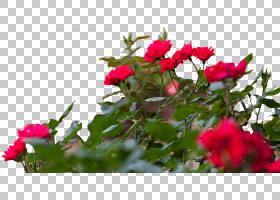 红色的花朵图片