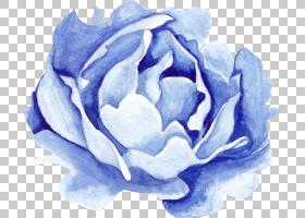 蓝色的水彩花朵