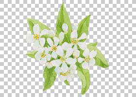白色的花朵和绿叶