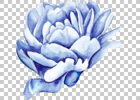 水彩蓝色花朵