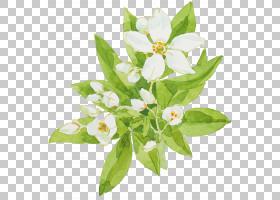 绿色的叶子衬托着白色的花朵