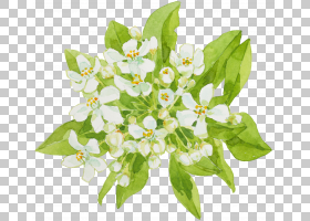 白色的花朵和绿色的叶子